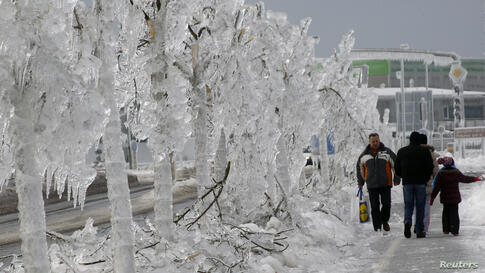 Ice covers the trees in Postojna, Slovenia.