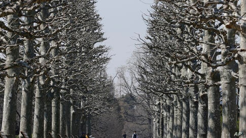 Visitors stand on a line of trees at Shinjuku Gyoen park in Tokyo, Japan.