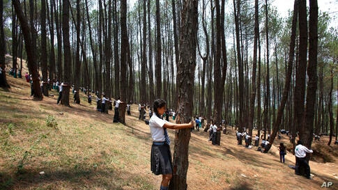 Nepalese students hug trees during a mass tree hugging on the World Environment Day on the outskirts of Katmandu.
