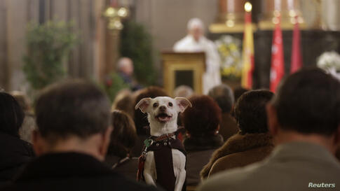 A dog takes part in a mass at San Anton Church in Madrid, Spain. Hundreds of pet owners bring their animals to the church to be blessed every year on the day of St. Anthony, the patron saint of animals.