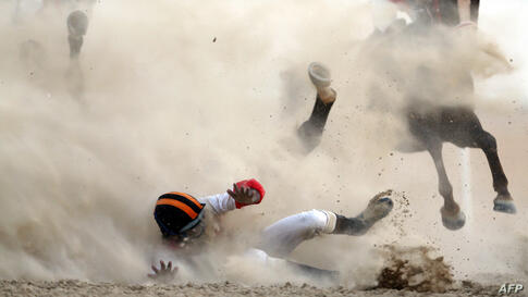 A jockey and his horse fall as they compete in a purebred Arabian horse race on the sidelines of the Mazayin Dhafra Camel Festival in the desert, 150 kilometers west of the United Arab Emirates' capital Abu Dhabi.