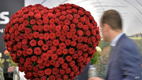 A man watches a heart of roses at IPM, one of the world's leading horticultural trade fair in Essen, Germany.