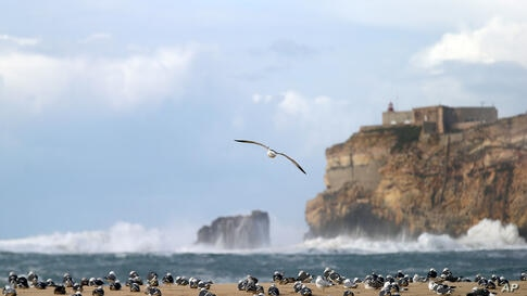 Seagulls stay ashore as strong winds batter the west coast fishing village of Nazare, Portugal, Jan. 18 2014.