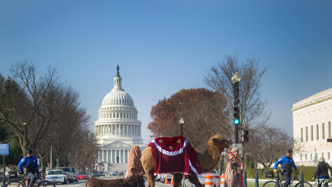 Members of Faith and Action in the Nations Capital lead a donkey and a camel as they participate in a Live Nativity procession on Capitol Hill in Washington, D.C.