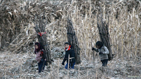 North Korean girls carry firewood on their backs as they walk on the banks of the Yalu River, some 100 kilometers (62 miles) from the town of Sinuiju, opposite the Chinese border city of Dandong, Dec. 16, 2013.