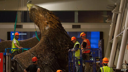 Workers secure a giant eagle sculpture after it fell from the roof inside the airport building in Wellington, New Zealand, after a 6.3-magnitude earthquake.