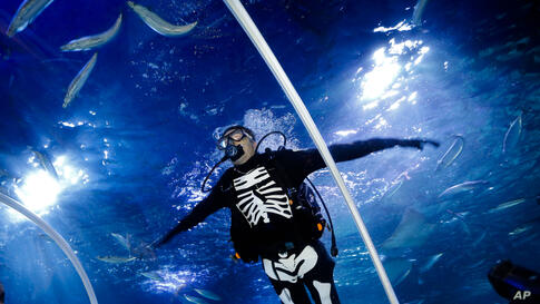 A diver in a skeleton costume dives during a media opportunity to mark Halloween at the Sea Life aquarium in Berlin, Germany, Oct. 28, 2013.