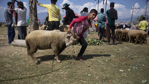 A Kashmiri boy pulls a sheep at a livestock market ahead of Eid al-Adha festival in Srinagar, Indian controlled Kashmir, Monday…