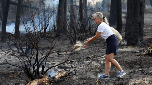 A woman throws sand on the burning trees in the Chiberta forest in Anglet, southwestern France, Friday July 31, 2020. More than…
