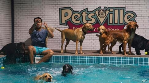 Francis De Arce of Bulacan, from the Philippines, throws a tennis ball for dogs to chase at a waterpark for dogs where he works…