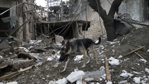 A dog walks in the yard of a house destroyed by shelling by Azerbaijan's artillery during a military conflict in Stepanakert,…