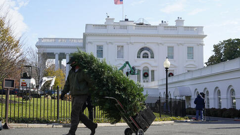 A worker carries a tree as holiday wreaths are hung on windows outside the White House, Wednesday, Nov. 25, 2020, in Washington…