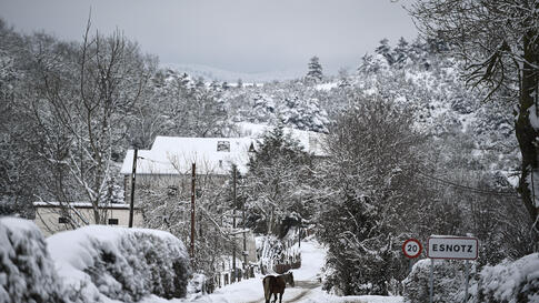 A horse walks along the road as snow covers the landscape in the small Pyrenees village of Esnotz, northern Spain, Tuesday, Jan…