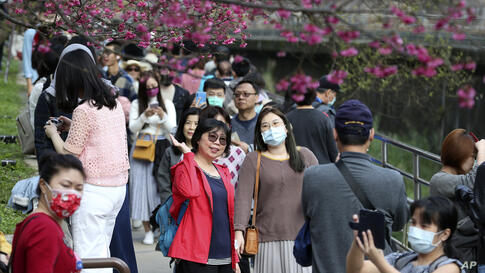 People wearing face masks to help curb the spread of the coronavirus walk under the cherry blossoms at the last day of Chinese…