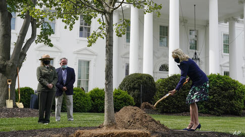 First lady Jill Biden participates in an Arbor Day tree planting ceremony at the White House, Friday, April 30, 2021, in…