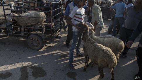 Vendors wait for customers to buy sheep at a livestock market in preparation for the upcoming Muslim Eid al-Adha holiday in…