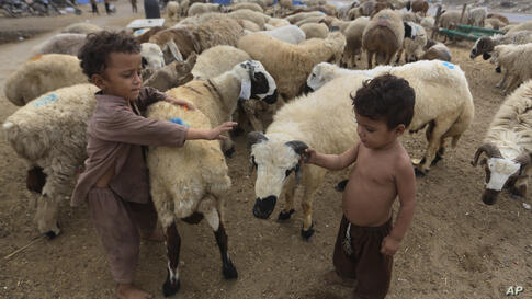 Children play with sheep at a roadside cattle market set up for the upcoming Muslim festival Eid al-Adha in Karachi, Pakistan,…