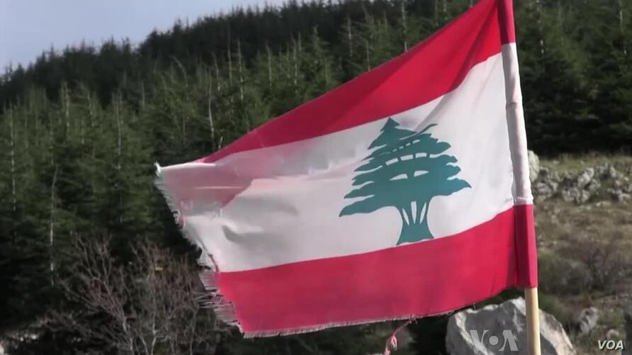 The cedar is Lebanon's national symbol, the center piece of the nation's flag and shield.