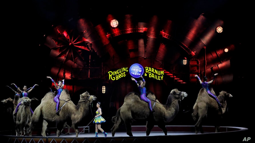 "Ringling Bros. and Barnum & Bailey performers ride camels during a performance, Jan. 14, 2017, in Orlando, Fla. The Ringling Bros. and Barnum & Bailey Circus will end the ""The Greatest Show on Earth"" in May, following a 146-year run of performances."