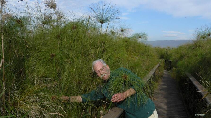 John Gaudet walks through a papyrus swamp in Israel in 2011. (Courtesy John Gaudet)