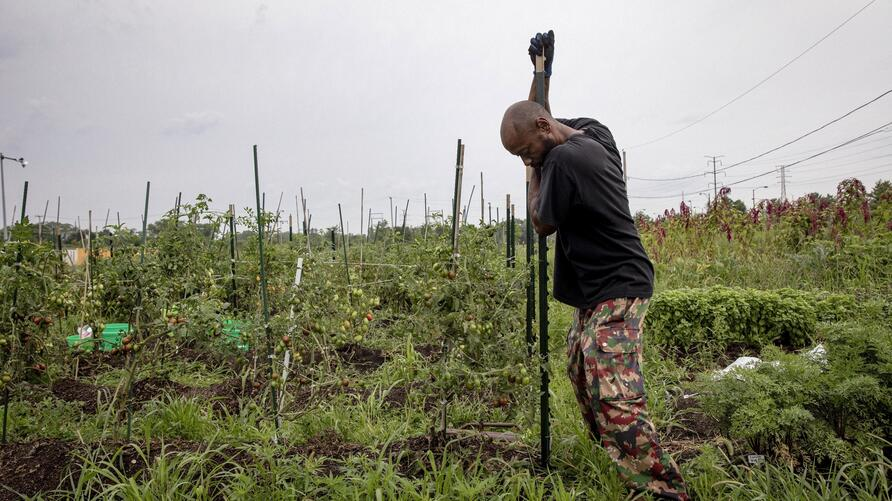 In this Tuesday, Aug. 20, 2019, photo, Kamau Rashid works in his garden in the South Chicago Farm on Chicago's south side…