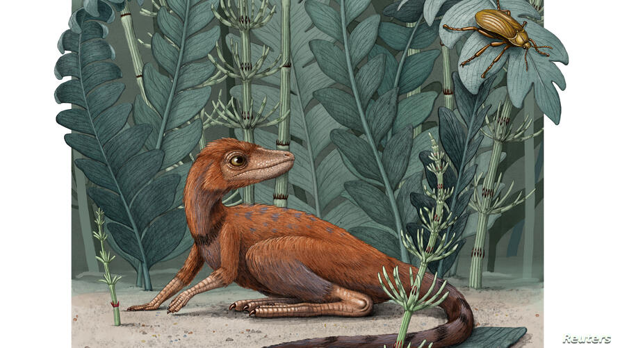 Kongonaphon kely is seen in what would have been its natural environment in an illustration