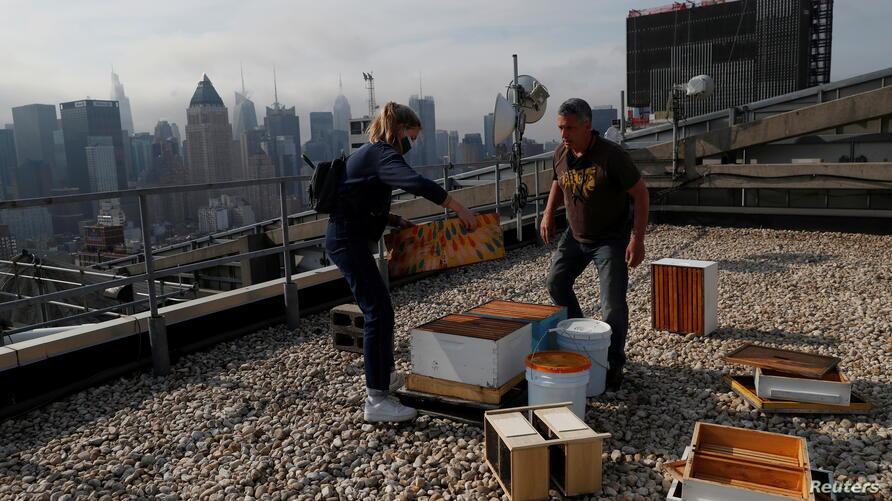 Urban beekeeper Andrew Cote replenishes bee hives on a rooftop building in New York City