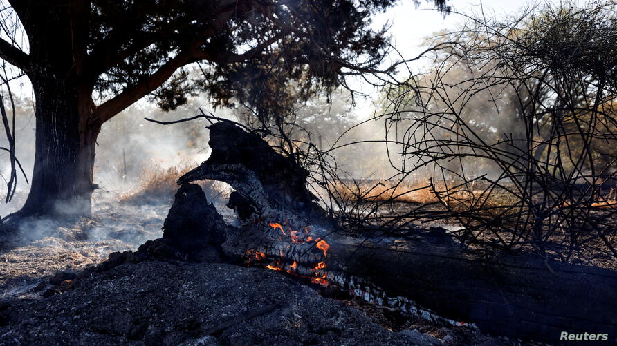 A tree in a field catches fire after Palestinians in Gaza sent incendiary balloons over the border between Gaza and Israel, Near Nir Am