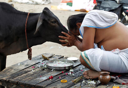A Hindu devotee offers prayers to a cow after taking a holy dip in the waters of Sangam, a confluence of three rivers - the Ganga, the Yamuna and the mythical Saraswati - in Allahabad, India.
