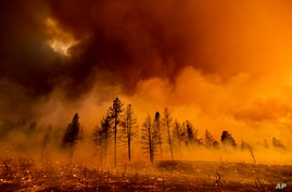 Smoke envelops trees as the Sugar Fire, part of the Beckwourth Complex Fire, burns in Doyle, Calif., Friday, July 9, 2021. (AP…
