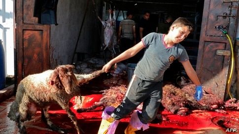 TOPSHOT - Palestinian Muslimss slaughter animals during celebrations for Eid al-Adha in the West Bank village of village of al…