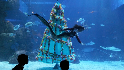 TOPSHOT - Visitors watch as a diver swims past a Christmas tree at the Jakarta aquarium in Jakarta on December 24, 2020. (Photo…