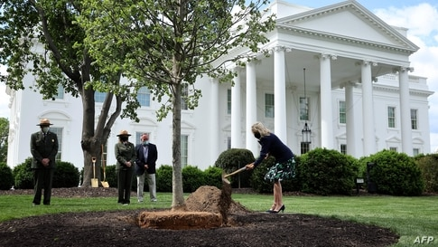 WASHINGTON, DC - APRIL 30: First lady Dr. Jill Biden participates in a tree planting ceremony on the North Lawn of the White…