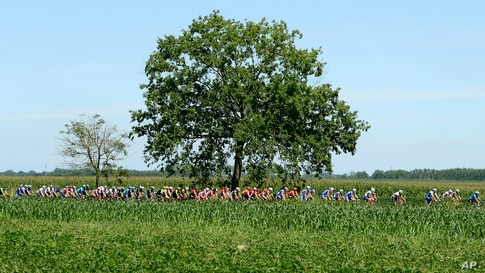 Cyclists pedal through the countryside during the Milano Torino, a 198-kilometer cycling race from Milan to Turin, in Milan,…