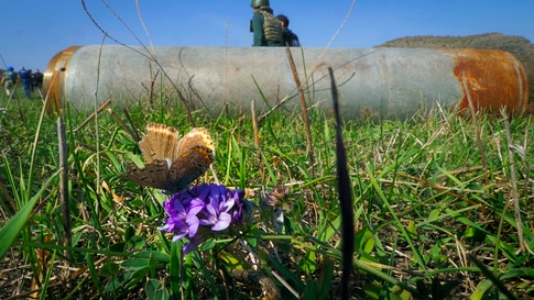 A butterfly sits on a flower near a fragment of a rocket after shelling by Azerbaijan's artillery in Stepanakert,  in the…