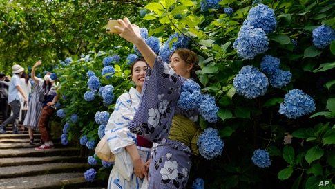 Visitors take masks off to take pictures as hydrangea flowers are fully blooming at Meigetsu-in Buddhist temple Friday, June 11…