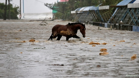 A horse crosses a water-logged road after rains ahead of Cyclone Yaas at Digha