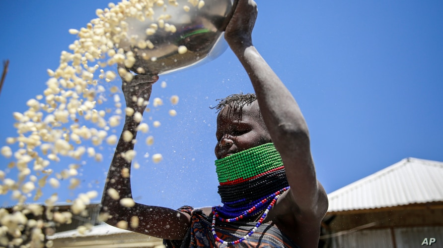 In this photo taken Friday, March 22, 2019, a Kenyan woman winnows maize to remove the chaff from the grain, outside her house…