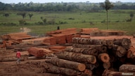 A view of piles of lumber cut from trees that were illegally extracted from the Amazon rainforest in Viseu, Para state,…