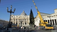 The Vatican Christmas Tree is installed in St. Peter's Square, Vatican November 30, 2020.   Vatican Media/?Handout via REUTERS …