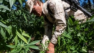 Mexican soldiers destroy a marihuana plantation near La Rumorosa town in Tecate, Baja California state, Mexico on August 28,…