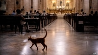 A cat walks inside the Cathedral of Havana during a Mass officiated by Cardinal Timothy Dolan, Archbishop of New York, in…