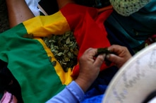"A Bolivian woman holds coca leaves on a Bolivian flag at the ""Cumbre de los Pueblos"" (People's Summit), organised by social…"
