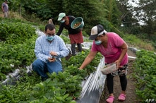 Rene Urrutia (L), owner of the San Ernesto plantation, traditionally dedicated to the cultivation of coffee, supervises…