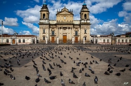 Pigeons stand in a deserted Constitutions square in front of the Metropolitan Cathedral during lockdown to stop the spread of…