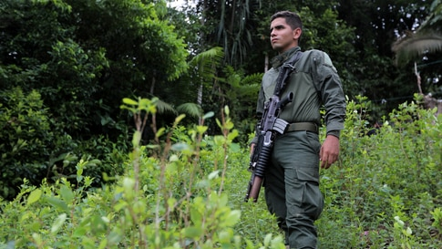 Anti-narcotics police stands guard during an eradication operation at a coca leaves plantation in Tumaco, Colombia February 26,…