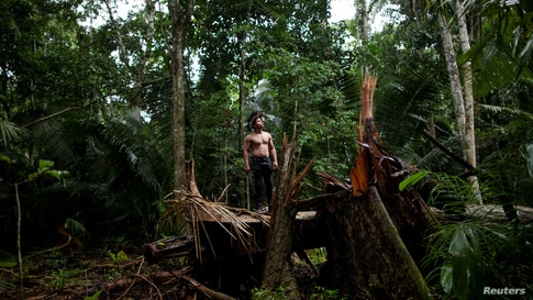 An indigenous man called Tebu, of Uru-eu-wau-wau tribe, looks on in an area deforested by invaders in the village of Alto Jaru,…