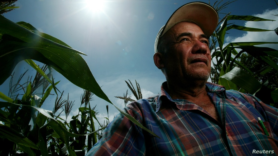 Farmer Santiago Valladares stands in his corn field in Jutiapa, Guatemala July 28, 2005.  Central American presidents said on…