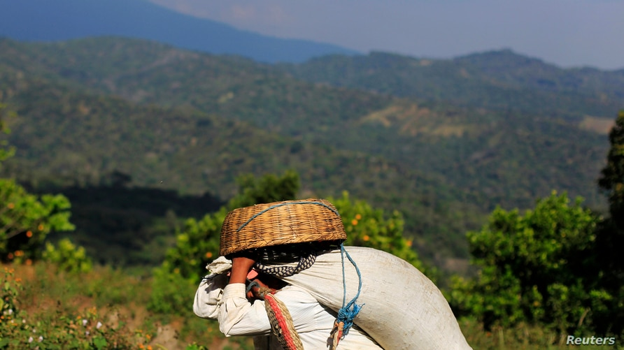 A worker carries a sack of freshly harvested coffee beans at the Santa Adelaida coffee cooperative in La Libertad, on the…