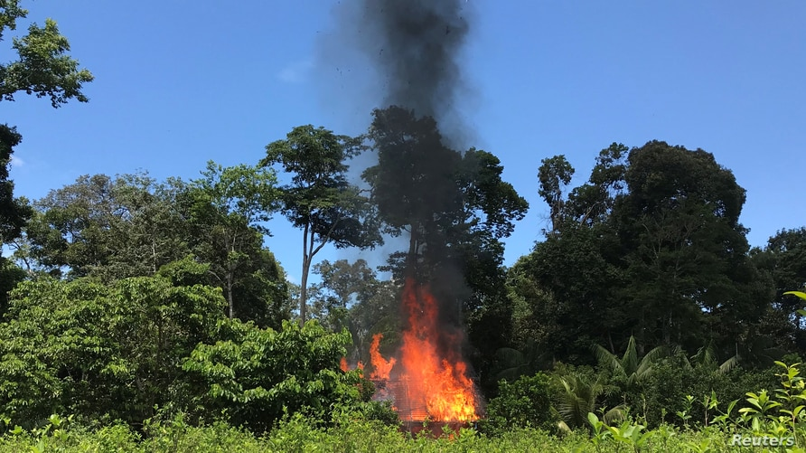 A coca leaf plantations is seen burning after an operation of Peruvian anti-narcotics police and Brazilian Federal Police in…